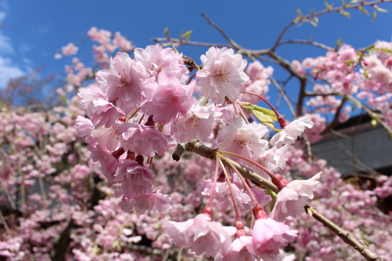 塩竈神社、春の楽しみ方(前編)